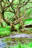 森林glendalough 免版税库存照片