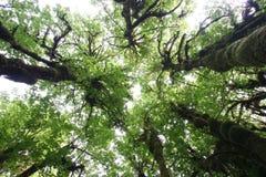森林hoh雨状态华盛顿 免版税图库摄影