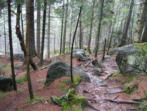 森林ii 免版税库存照片