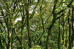 森林iii 库存图片