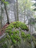 森林iii 免版税图库摄影
