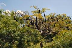 森林jozani 库存图片