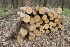 森林lansscape 免版税库存图片