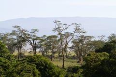 森林lerai 免版税图库摄影