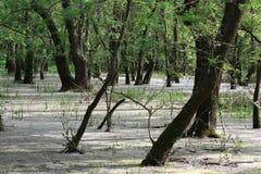 森林letea 免版税库存照片