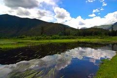 森林lunang天空 免版税库存照片