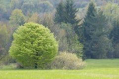 森林magurski多彩多姿的国家公园 免版税库存照片