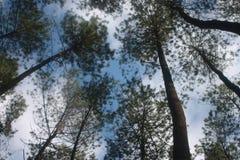 森林ngargoyoso 库存照片