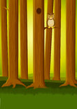 森林owlin 免版税库存照片