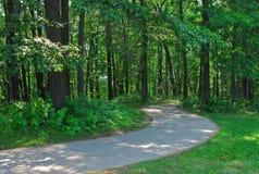 森林path1 免版税库存图片