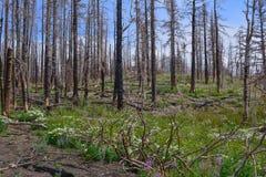 森林Regeration 免版税库存图片