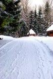 森林roand冬天 免版税库存照片