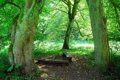 森林sazava 库存图片