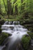 森林Spring Valley优胜美地 库存照片
