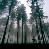 森林thetford 库存图片