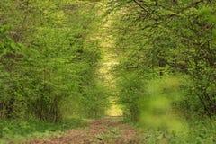 森林tunel 库存图片