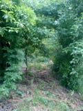 森林unwalked道路 库存图片