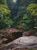 森林vibe 免版税图库摄影