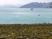 贾森港口南乔治亚南极洲 库存图片