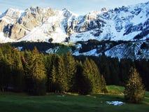 森蒂斯峰美好的高山峰顶Alpstein山脉的,在雪盖下 免版税库存图片