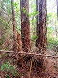 4棵树一个树桩 库存照片