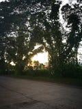 2棵树和太阳 免版税图库摄影