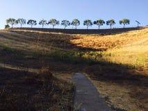 11棵树 免版税库存图片