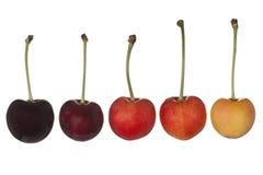 100棵樱桃隔离白色 免版税库存照片