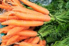 2棵红萝卜 免版税库存图片