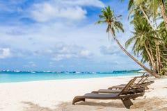 椅子和棕榈树在沙子靠岸,热带假期 图库摄影