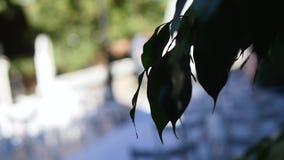 椅子在婚礼的 婚礼花曲拱装饰 用花装饰的婚礼曲拱 室外 股票视频