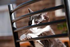 椅子小猫 库存图片