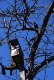 椋鸟科和鸟舍在树 库存图片