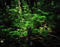 椋鸟科在黑暗的森林 免版税库存图片