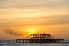 椋鸟群在西部码头的在布赖顿 免版税库存照片