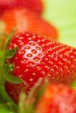 植入草莓 免版税图库摄影