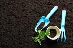 植物、罐和园艺工具在土壤 免版税库存照片