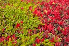 植物、绿色和红色纹理  库存照片