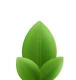 植物三现实绿色叶子的例证被隔绝的  库存例证