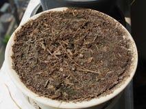 植物不可能增长的旱田 免版税库存照片