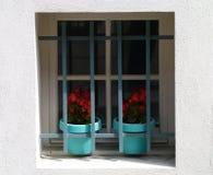 植物关在监牢里 库存照片