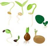 植物再生产集合 库存例证