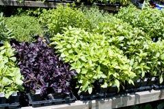 植物出售 库存图片