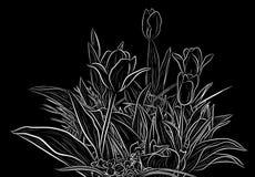 植物剪影 库存图片
