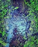 植物包围的微型池塘 库存照片
