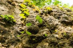 植物单独草叶在峭壁的 免版税库存图片