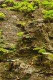 植物单独草叶在峭壁的 免版税库存照片