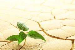 植物发芽 库存照片