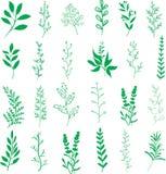 植物叶子分支 向量例证