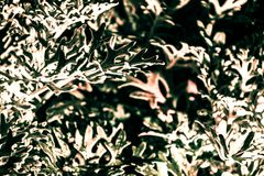 植物叶子在与光的晚上 免版税库存照片